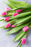 Schöne gelbe rosa Tulpen Lizenzfreie Stockfotografie