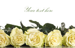 Schöne gelbe Rosen Lizenzfreies Stockbild