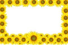 Schöne gelbe Sonnenblume auf dem weißen Hintergrund Lizenzfreie Stockfotos