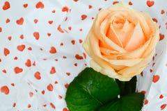 Schöne Gelbrose auf einem weißen Hintergrund Stockbild