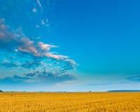 Schöne Getreideweidelandschaft fotografiert bei Sonnenaufgang Lizenzfreies Stockbild