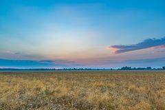 Schöne Getreideweidelandschaft fotografiert bei Sonnenaufgang Lizenzfreies Stockfoto
