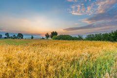 Schöne Getreideweidelandschaft fotografiert bei Sonnenaufgang Stockfotos