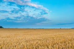 Schöne Getreideweidelandschaft fotografiert bei Sonnenaufgang Stockbilder