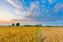 Schöne Getreideweidelandschaft fotografiert bei Sonnenaufgang Lizenzfreie Stockfotografie