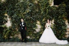 Schöne glückliche junge Braut, die hübschen Bräutigam in der sonnenbeschienen Gleichheit küsst Stockfotografie