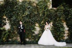 Schöne glückliche junge Braut, die hübschen Bräutigam in der sonnenbeschienen Gleichheit küsst Stockbild