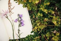 Schöne Glockenblume und Wildflowers auf Papiernotizbuch auf bluebe Lizenzfreie Stockfotos