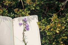 Schöne Glockenblume und Wildflowers auf Papiernotizbuch auf bluebe Lizenzfreie Stockbilder