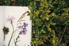 Schöne Glockenblume und Wildflowers auf Papiernotizbuch auf bluebe Stockfotografie