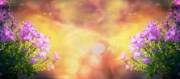 Schöne Glockenblumen auf Sonnenaufgang im Garten oder im Park, Naturhintergrund, Fahne
