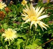 Schöne goldene Blume!! stockfoto