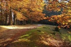 Schöne goldene Herbstlandschaft lizenzfreies stockbild