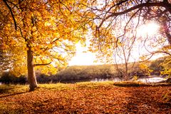 Schöne, goldene Herbstlandschaft mit Bäumen und goldene Blätter im Sonnenschein in Schottland lizenzfreies stockfoto