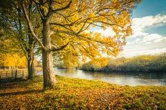 Schöne, goldene Herbstlandschaft mit Bäumen und goldene Blätter im Sonnenschein in Schottland stockbild