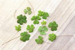 Schöne Grünblätter Lizenzfreies Stockfoto