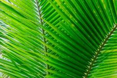 Schöne Grünblätter als Hintergrund Stockbilder
