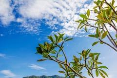 Schöne Grünblätter auf blauem Himmel Lizenzfreie Stockfotografie