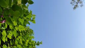 Schöne Grünblattnatur des blauen Himmels lizenzfreies stockfoto