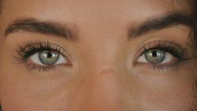 Schöne grüne Augen stock video