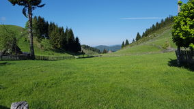 Schöne grüne Bergwiese Stockbilder