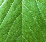 Schöne grüne Blattnahaufnahme des Hintergrundes Stockfotografie