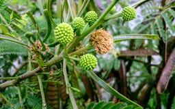 Schöne grüne Blumen im Garten Lizenzfreies Stockfoto