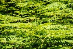 schöne grüne Farnblätter unter Sonnenlicht im Wald Lizenzfreie Stockbilder
