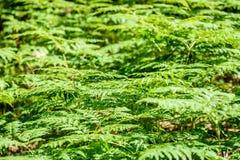 schöne grüne Farnblätter unter Sonnenlicht im Wald Stockfotos