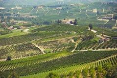 Schöne grüne Felder Stockfotos
