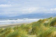 Schöne grüne Gräser in Ozean setzen in San Francisco, CA auf den Strand lizenzfreie stockfotos