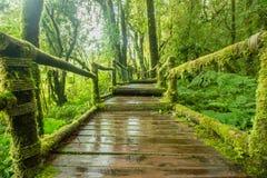 Schöne grüne Landschaft lizenzfreies stockfoto