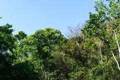 Schöne grüne Landschaft stockbild