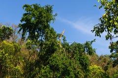 Schöne grüne Landschaft Stockbilder