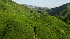 Schöne grüne Landschaft der Teeplantage in Cameron Highlands, Malaysia stockfotos