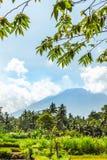 Schöne grüne Landschaft des Bergvulkans Agung auf Bali-Insel stockbilder