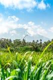 Schöne grüne Landschaft des Bergvulkans Agung auf Bali-Insel stockfotografie