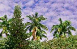 Schöne grüne lebende Verschiedenartigkeit lizenzfreies stockfoto