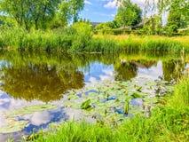 Schöne grüne Naturwaldlandschaft mit einem großen Flussteich mit Wasser lilly ` s in ihm stockfoto