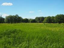 Schöne grüne Rasenfläche stockbild