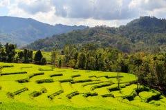 Schöne grüne Reisterrassen beleuchteten durch Sonne an einem bewölkten Tag Lizenzfreie Stockbilder