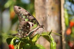 Schöne grüne Schmetterlinge stockbilder