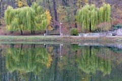 Schöne grüne Trauerweiden auf dem Ufer von einem Teich in einem Herbst parken Lizenzfreies Stockfoto