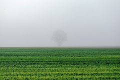 Schöne grüne Wiese im schweren Nebel Stockbild