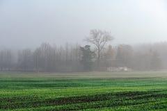 Schöne grüne Wiese im schweren Nebel Lizenzfreies Stockfoto