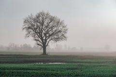 Schöne grüne Wiese im schweren Nebel Lizenzfreie Stockbilder