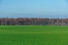 Schöne grüne Wiese im schweren Nebel Lizenzfreie Stockfotos