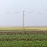 Schöne grüne Wiese im schweren Nebel Stockfoto