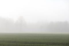 Schöne grüne Wiese im schweren Nebel Stockfotos