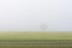 Schöne grüne Wiese im schweren Nebel Stockfotografie